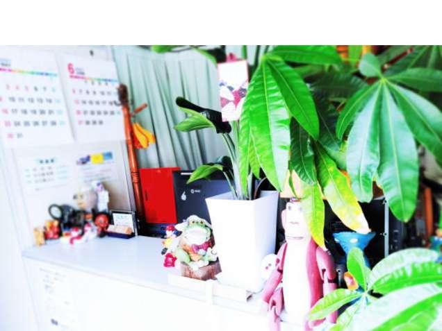 ふじの整体院 カイロプラクティック科・ほぐし療法科の写真3